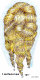 img463